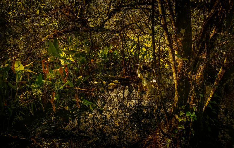 Forest Shadows-041.jpg