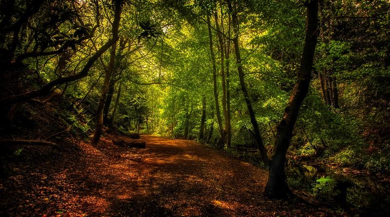 Forest Shadows-179.jpg