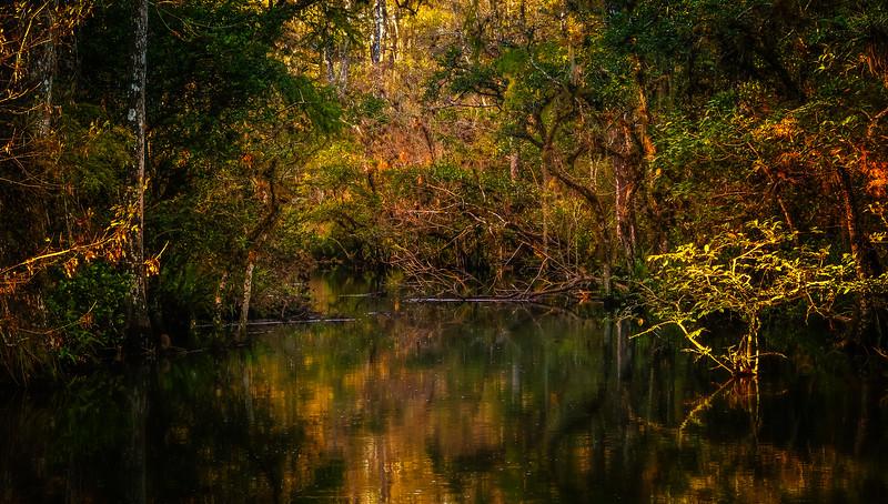 Forest Shadows-017.jpg