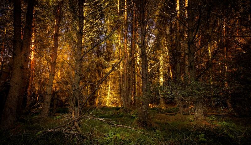 Forest Shadows-105.jpg