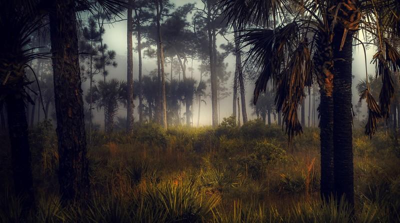 Forest Shadows-175.jpg