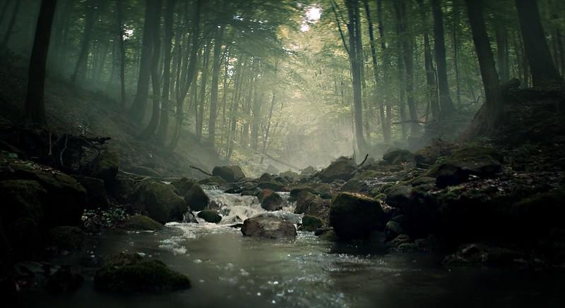 Forest Shadows-138.jpg
