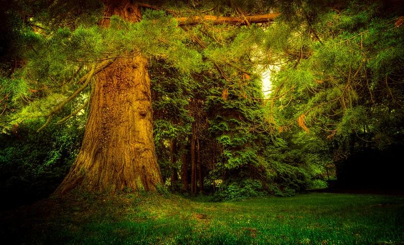 Forest Shadows-013.jpg