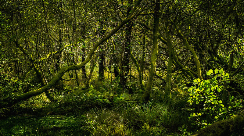 Forest Shadows-070.jpg