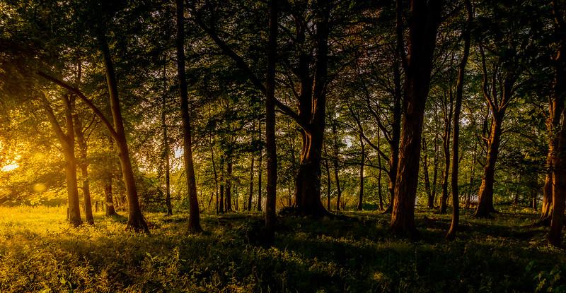 Forest Shadows-003.jpg
