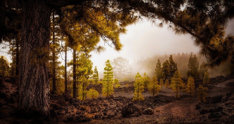 Tenerife by Ray Bilcliff-www.trueportraits.com