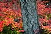 Red n Wood