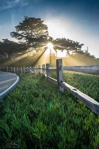 Monterey Mist