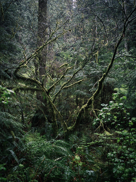 Vancouver Forest Scenery