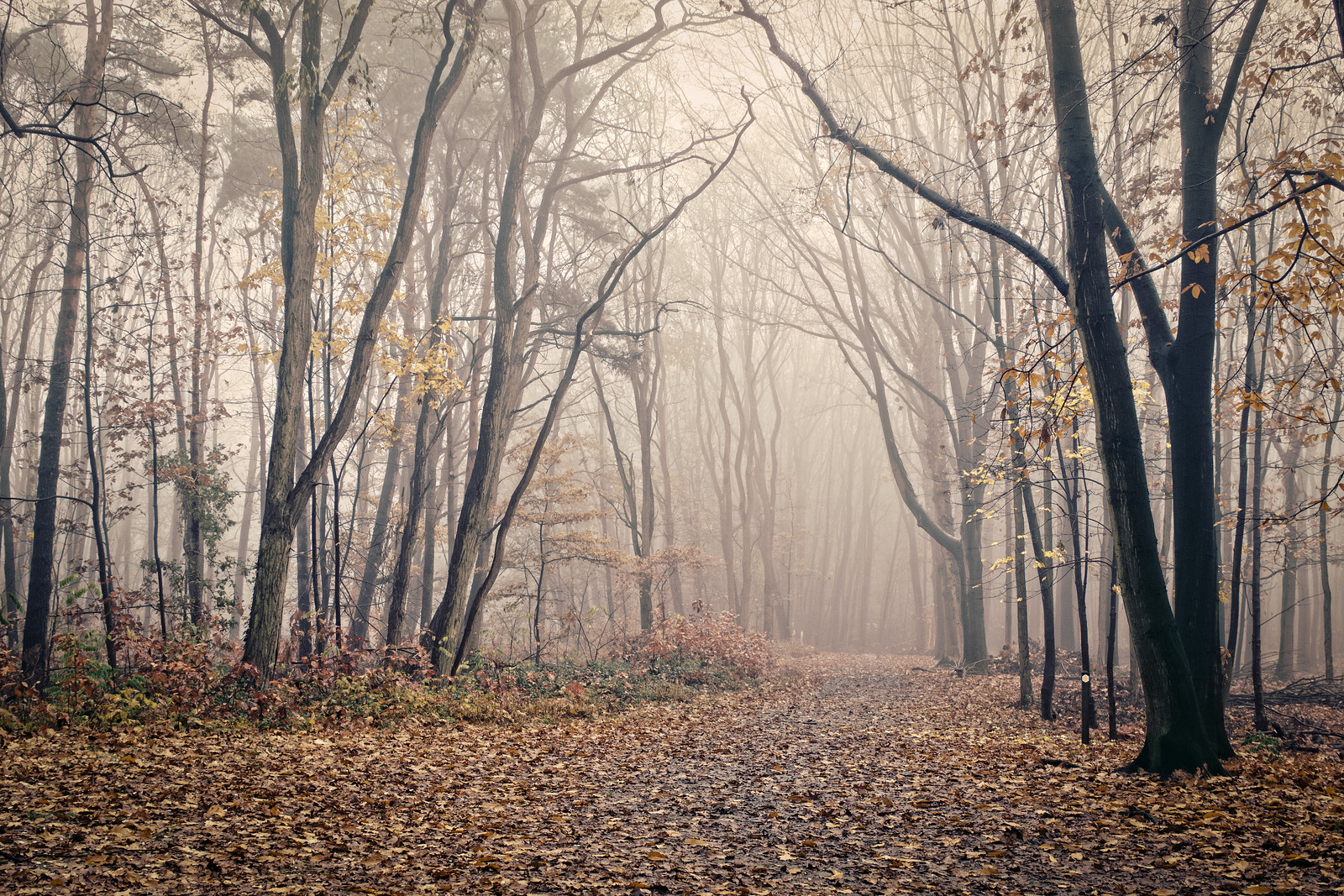 Sleepy Forest of Merode
