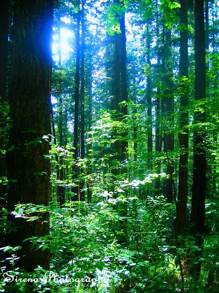 Pretty Forest