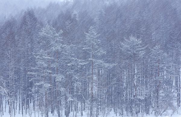 Nagano pref.