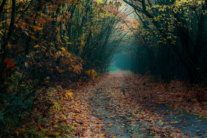 Fall's Pathway