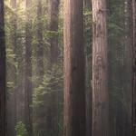 Upright Logs