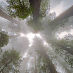 Mists of Del Norte