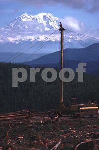 A spar pole for high lead logging in the Deschutes River watershed with Mt. Rainier in the background, WA
