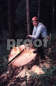 A timber faller with his chainsaw taking a break on the stump of the tree he has just cut.