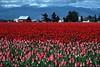Chehalis Valley & Rainier 3327_HDR