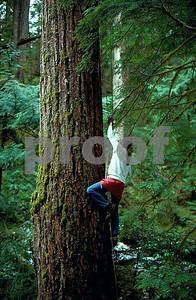 Lichen canopy study 1