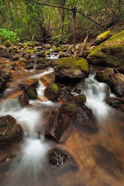 ~ Troutdale Creek III ~