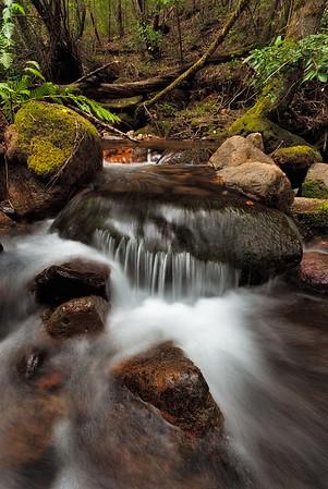 ~ Troutdale Creek ~