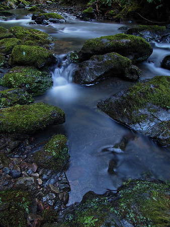 Stream in Fern Canyon I - Mendocino Coast