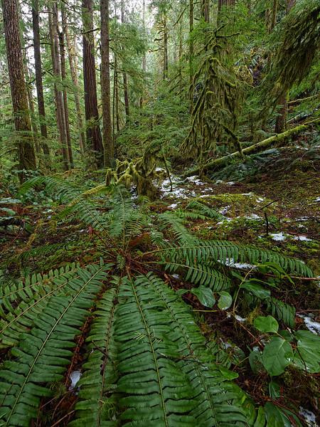 Jurassic - Olympic National Park - Washington