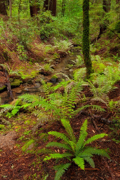 ~ Emerald Forest ~  Las Posadas Forest
