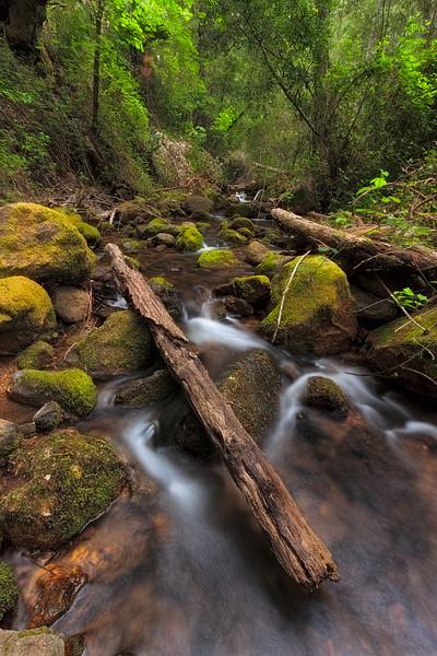 ~ The Fallen ~  Troutdale Creek