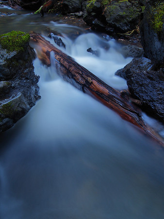 Stream in Fern Canyon II - Mendocino Coast
