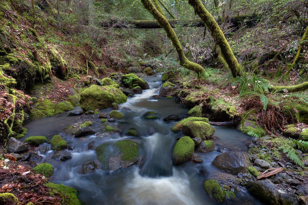 ~ Ritchie Creek VI ~