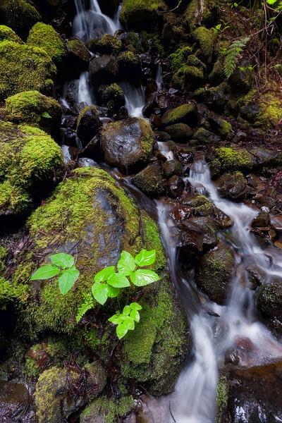 ~ Ritchie Creek V ~