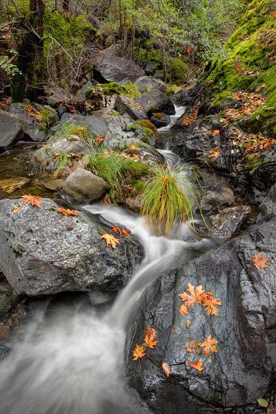 ~ Autumn Leaves ~  Anderson Creek