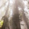 Symphonic - Redwoods, CA