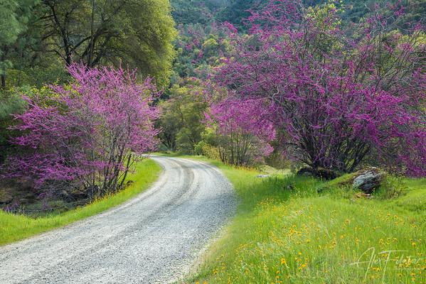 Redbud Road