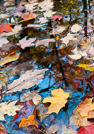 Fallen Leaves and Reflections