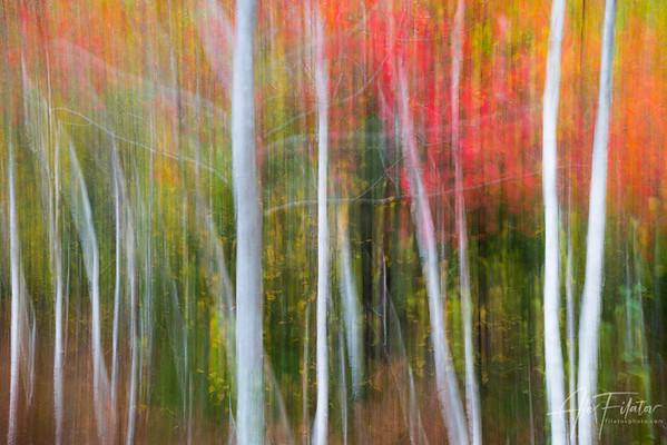 Autumnal Contrasts II