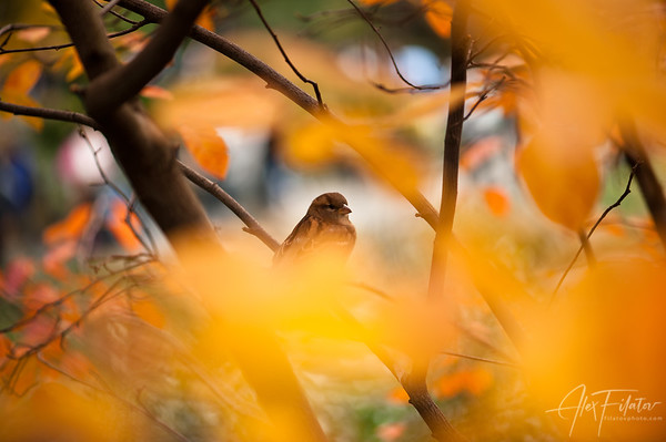On a Nest of Bokeh