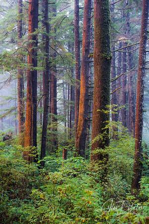 Last Light on the Evergreens