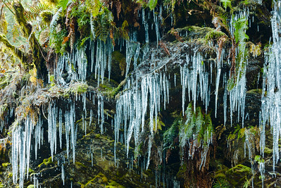 Icicles on the Mountain Loop Hwy