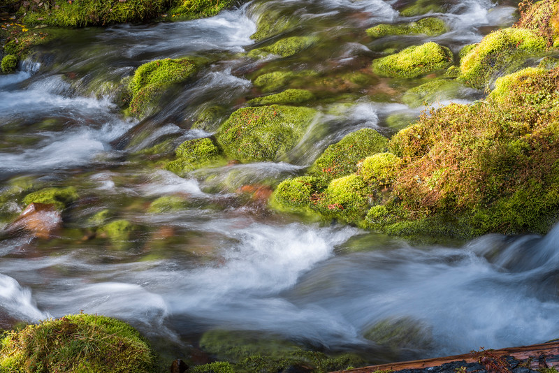 Moss and Whitewater