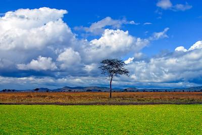 Tanzania Pond