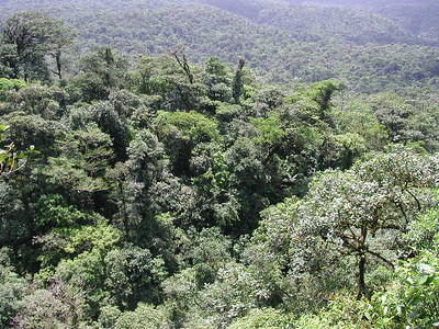 Costa Rican forest