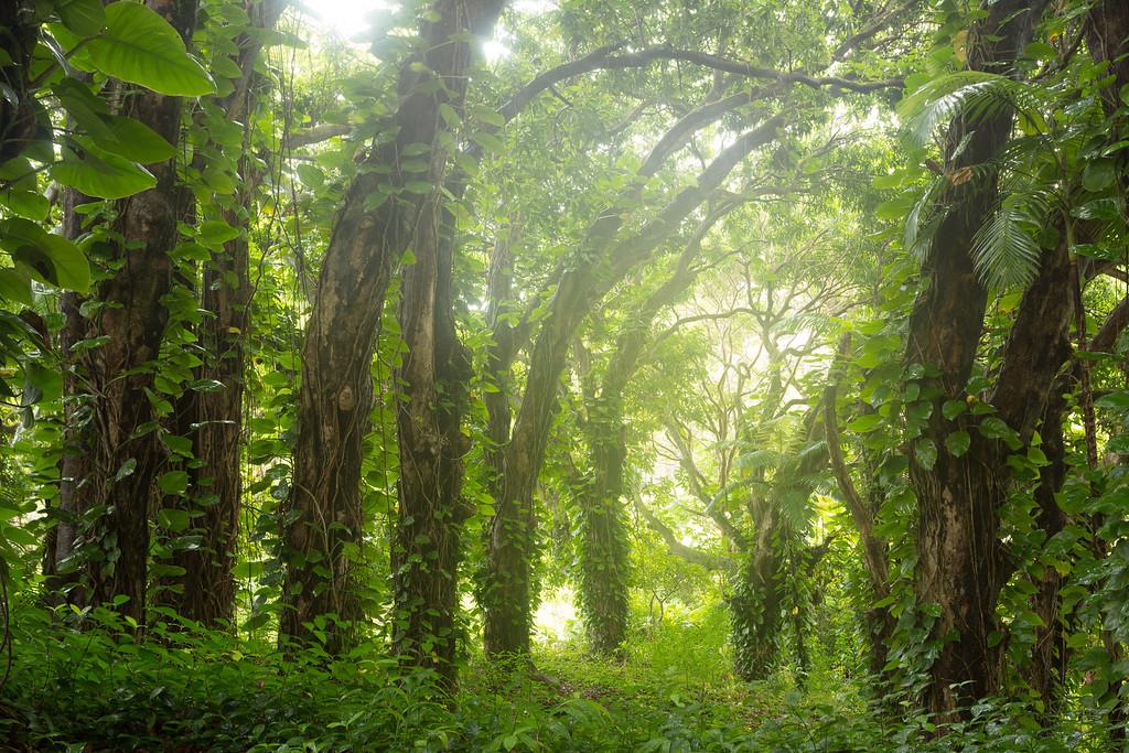 Big Island - Hawai'i, USA