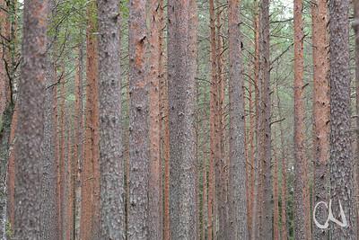 Valgesoo, Naturschutzgebiet, Moor, Estland, südlich Tartu, Taevaskoja bei Põlva