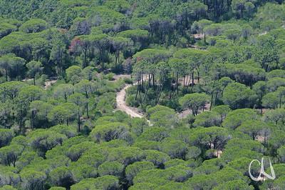 Weg durch den Pinienwald (Pinus pinea) im Naturpark Maremma, Parco Naturale della Maremma, bei Alberese, Provinz Grosseto, Toskana, Italien