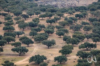 Wald, Eichenwald, Dehesa-Landschaft bei Torrejon, Extremadura, Spanien, Estremadura, Spain