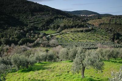 Oliven und Wald bei Ravi, Toskana, Italien, Tuskany, Italy