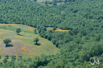 mediterraner Wald in der südlichen Toskana, Maremma