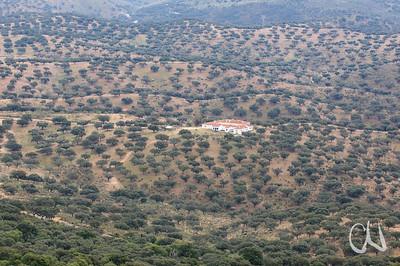 Wald, Eichenwald, Fincagebäude in Dehesa-Landschaft bei Torrejon el Rubio, Extremadura, Spanien, Estremadura, Spain